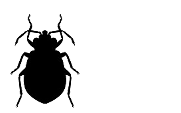 az-extermination-punaise-de-lit