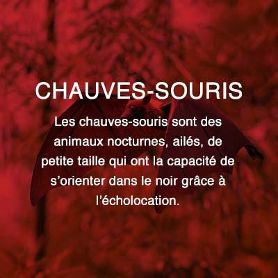 Groupe AZ extermination exterminateur relocalisation chauves-souris