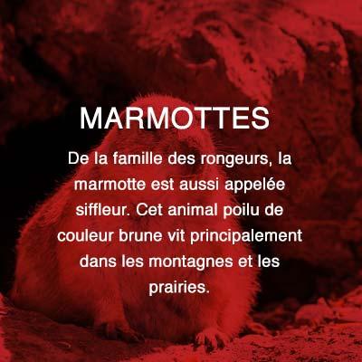 Groupe AZ extermination exterminateur relocalisation marmottes