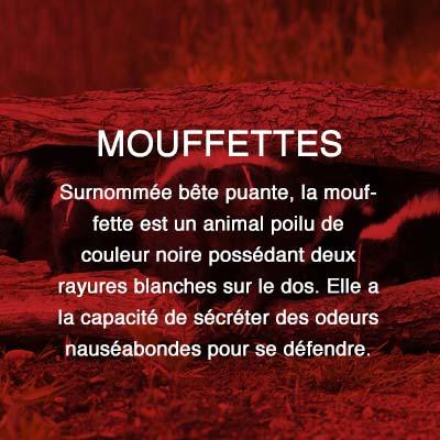 Groupe AZ extermination exterminateur relocalisation mouffettes