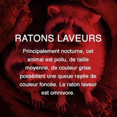 Groupe AZ extermination exterminateur relocalisation ratons-laveurs