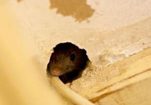 A to Z Extermination Mouse Holes