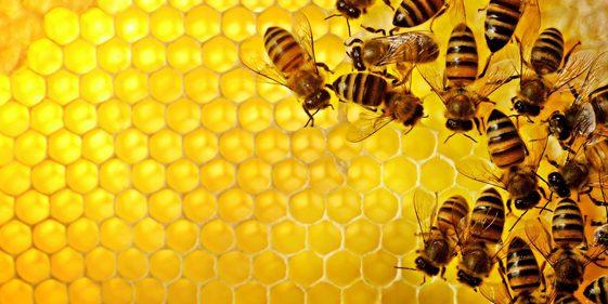 A to Z Extermination Exterminator Bee