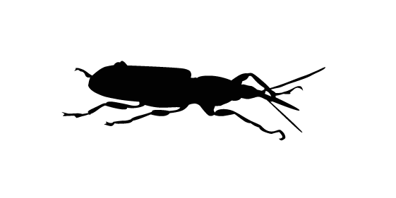 Groupe AZ Extermination exterminator Lyctus
