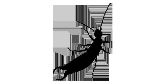 Groupe AZ Extermination exterminator Earwig