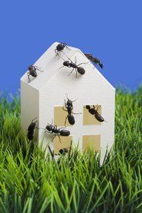 A à Z Extermination exterminateur insectes