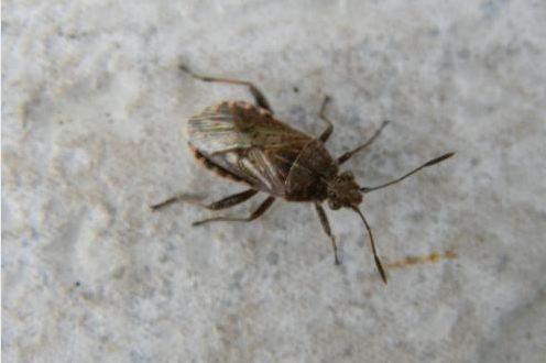Reconnaitre les insectes
