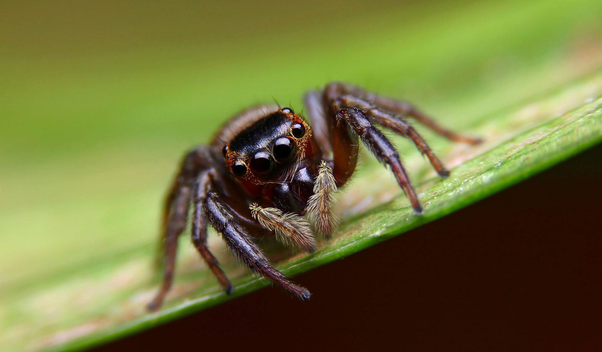 probl 232 me d araign 233 es dans la maison a 224 z extermination