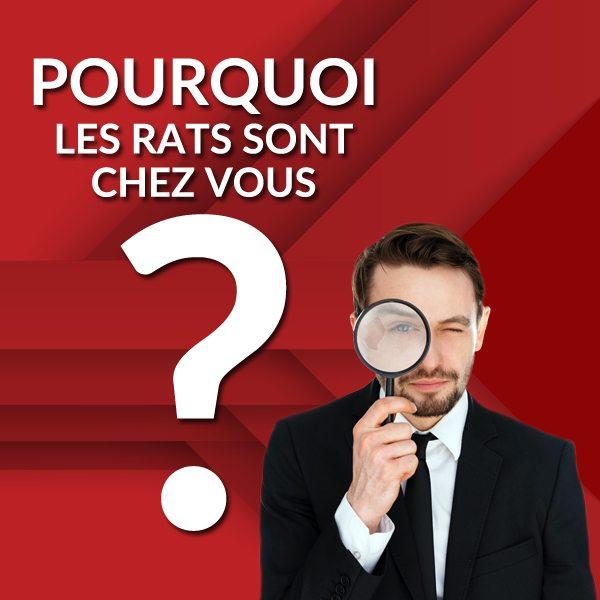 Groupe AZ extermination exterminateur rats