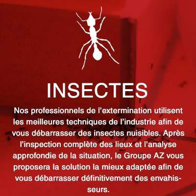 Groupe AZ Extermination exterminateurs insectes