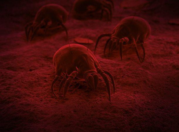 Groupe AZ Extermination exterminateur acariens