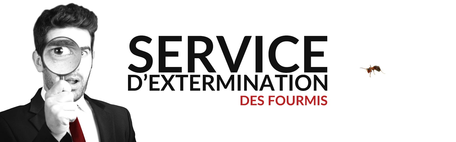 Groupe AZ extermination exterminateur fourmis